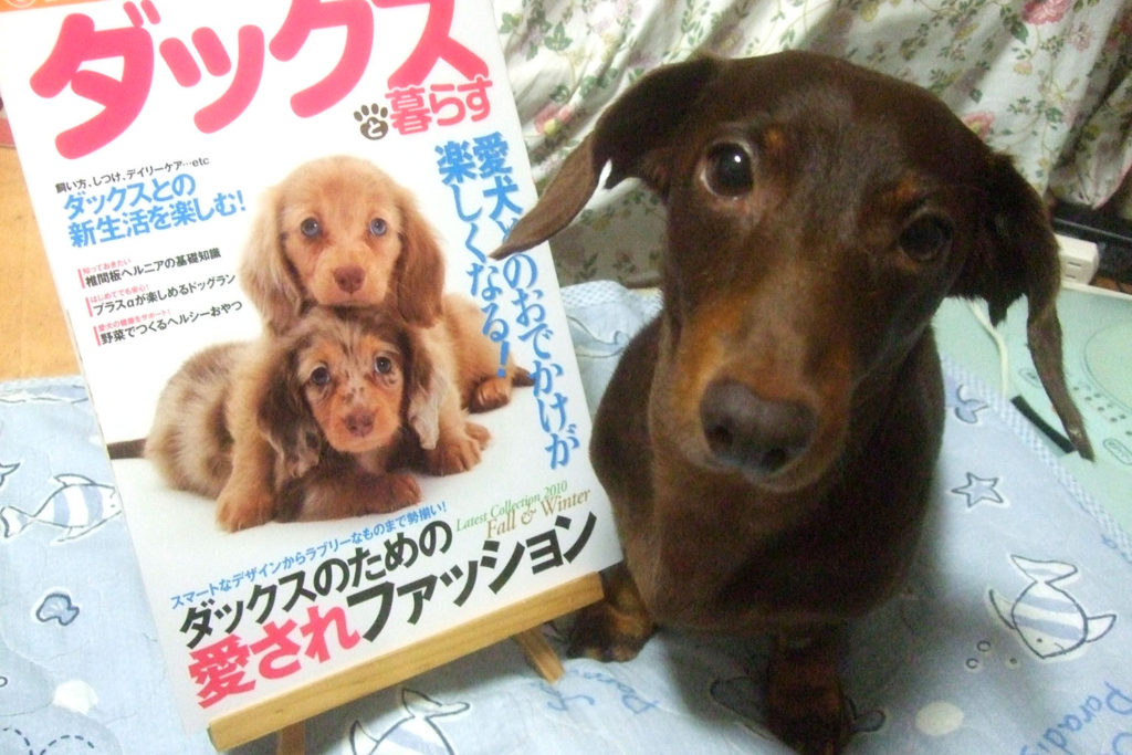 愛犬アポロと「Love Like Dachs!! vol.2」