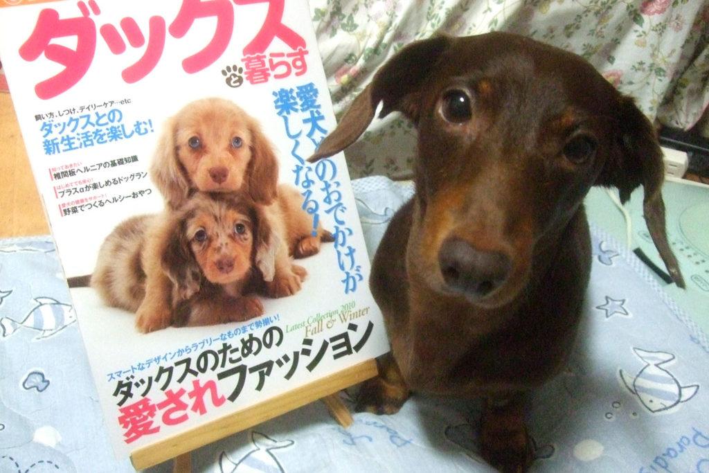 愛犬アポロと「Love Like Dachs!! vol.2」