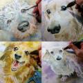 愛犬のお写真を元に水彩画を描かせていただきます