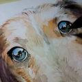 黒い耳の差し毛が印象的なダックスフンドの肖像画を描かせていただきました♪